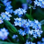 Balkonpflanzen Lexikon Balkonpflanzen Fur Den Blumenkastenbalkon Oase